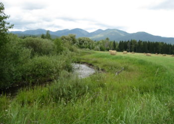 Stream restoration project on Haskill Creek
