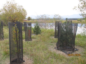 Enhancing a riparian buffer