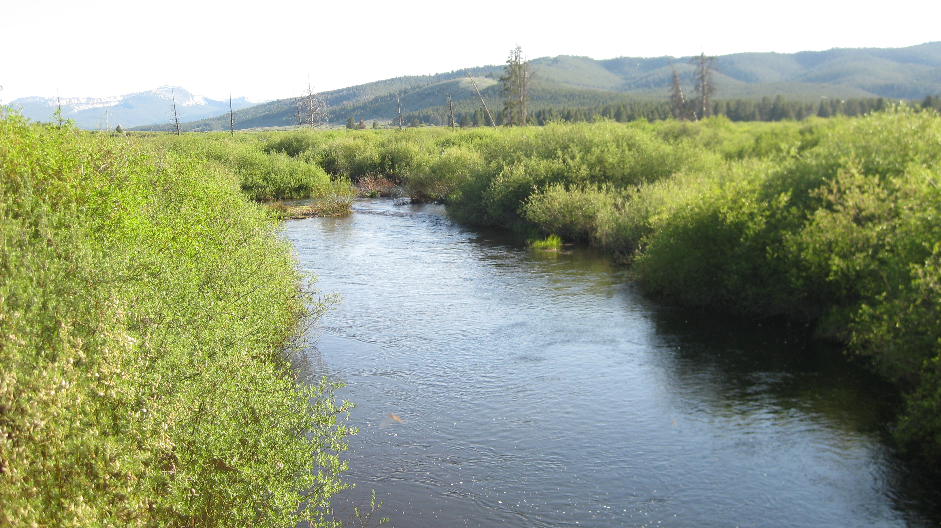 Ranching For Rivers