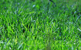 Lawn Drying Out? Water Smarter, Not Longer.