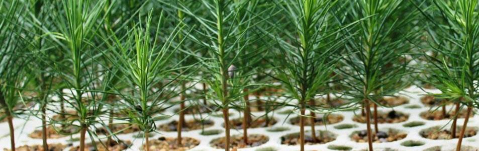 Conservation Seedling Program