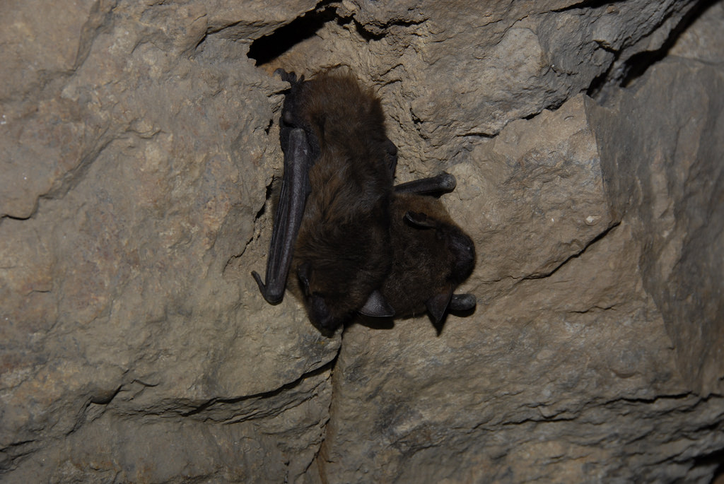 Reduce Mosquitoes With Bat Houses