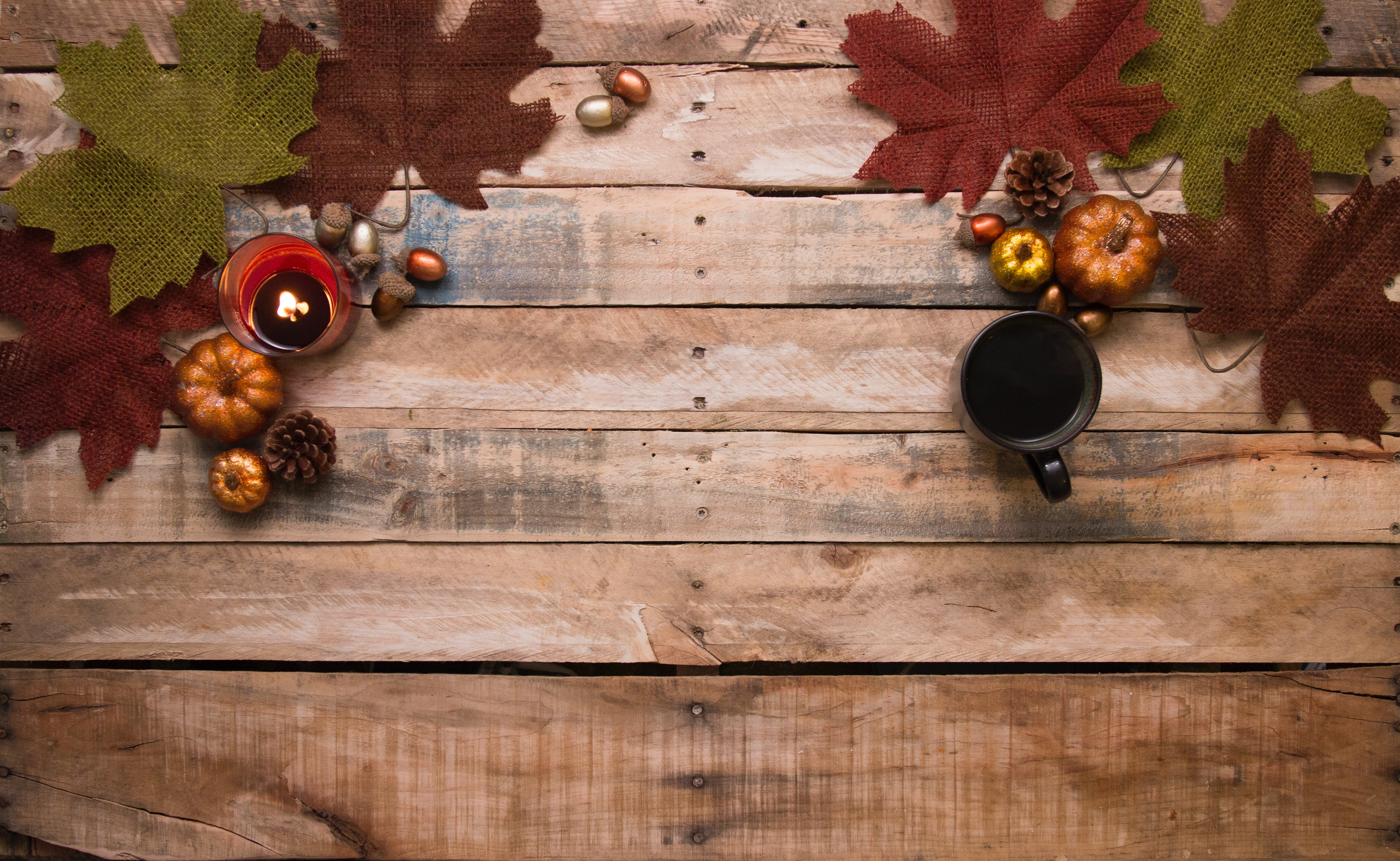 Thanksgiving Conservation Tips!